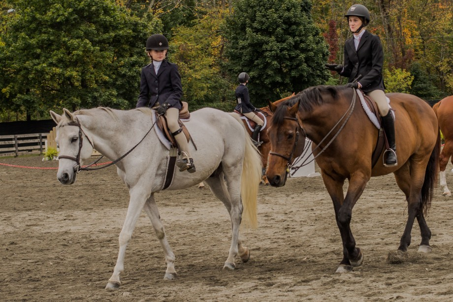 horses-1-of-1