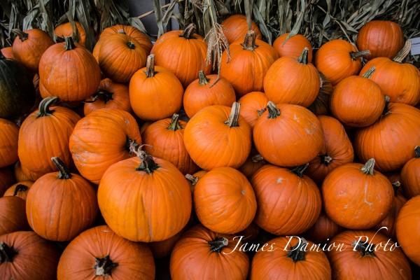 Pumpkins II-1.jpg